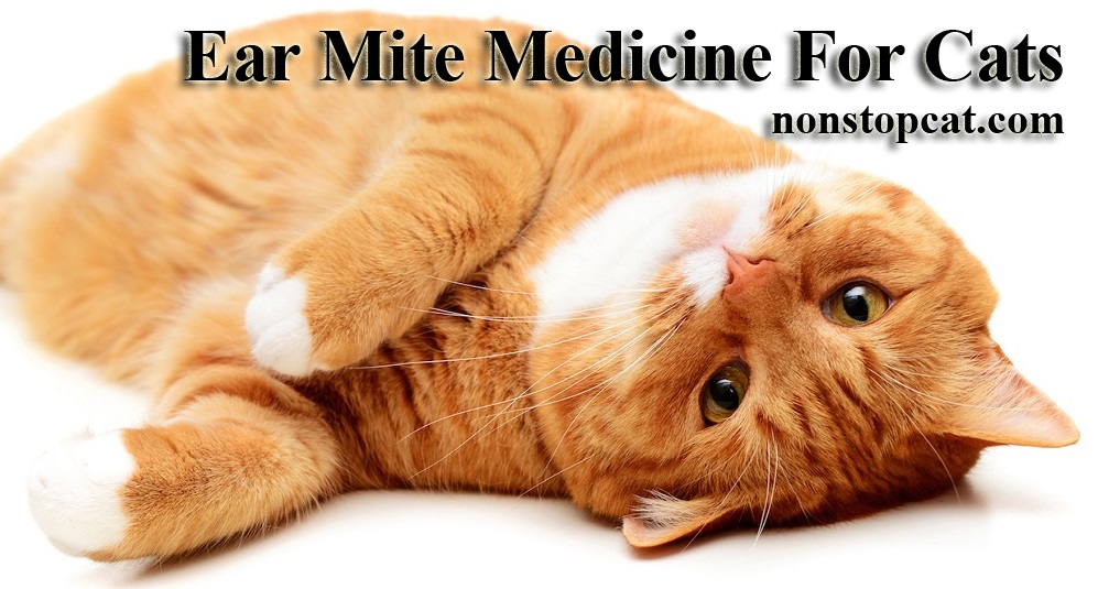 Ear Mite Medicine For Cats