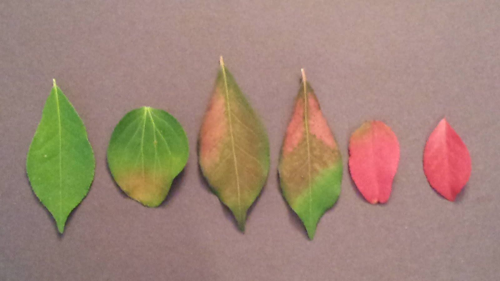 john the math guy the color of leaves