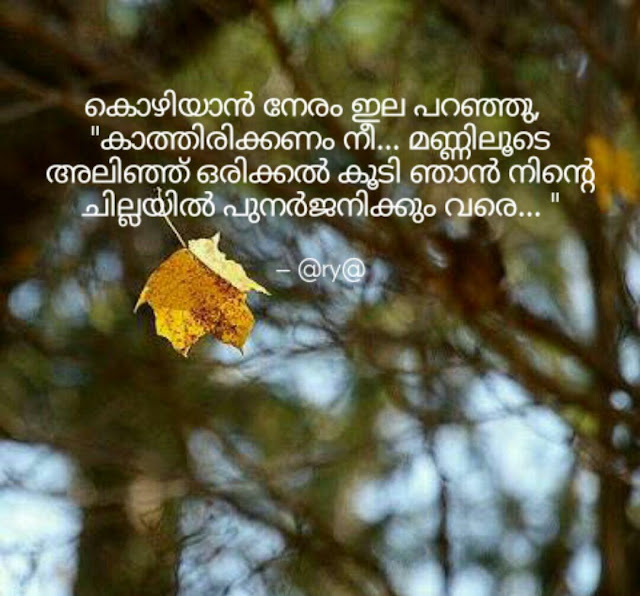 Quote of leaf and tree love rebirth wait in Malayalam font with nature background