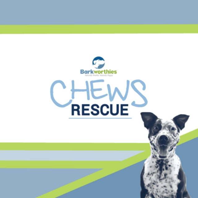 Oz the Terrier Barkworthies Chews Rescue philanthropic program