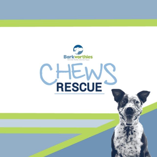 Oz the Terrier Barkworthies Chews Rescue philanthropic program