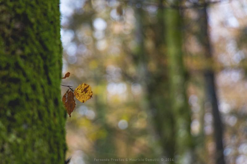 folha no tronco da árvore