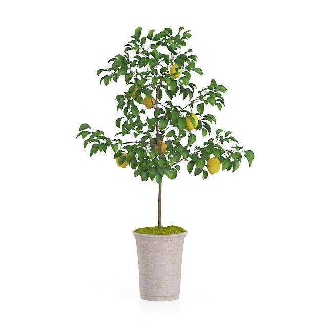 3D model free -  Plants_23