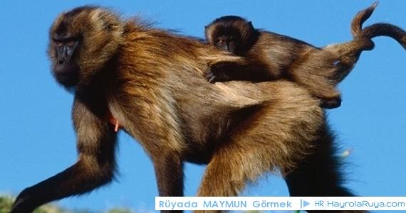 Rüyada Maymunun Görülmesi