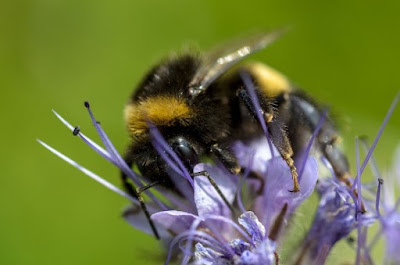 Bumblebees and others have small brains but surprising intelligence.