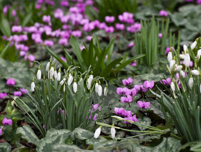 Winter Flowering Garden Plants