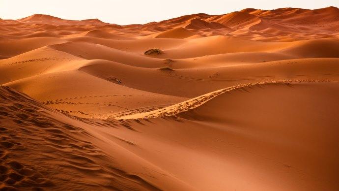 Wallpaper: The Hot Sahara Desert