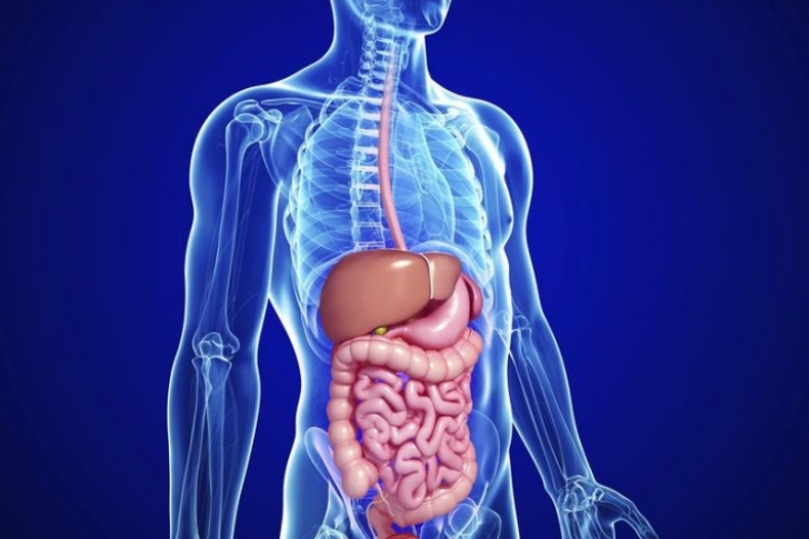 5 dicas para ajudá-lo a restaurar e manter sua saúde intestinal