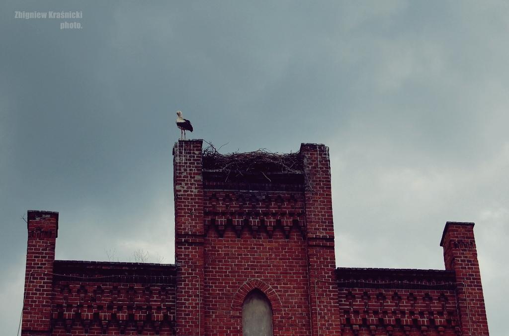 Bocian na budynku orneckiej szkoły