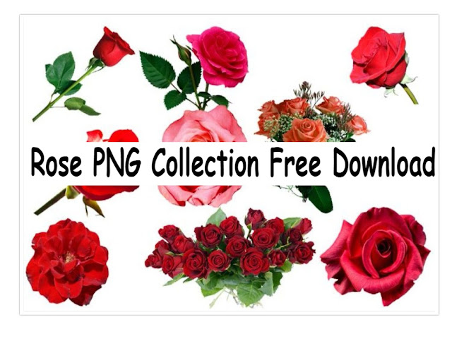 Rose PNG Full HD Free Download 2018