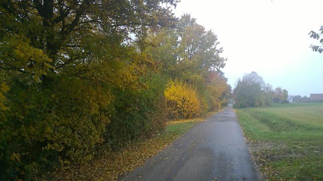 geteerter Weg vor den Feldern (c) by Joachim Wenk