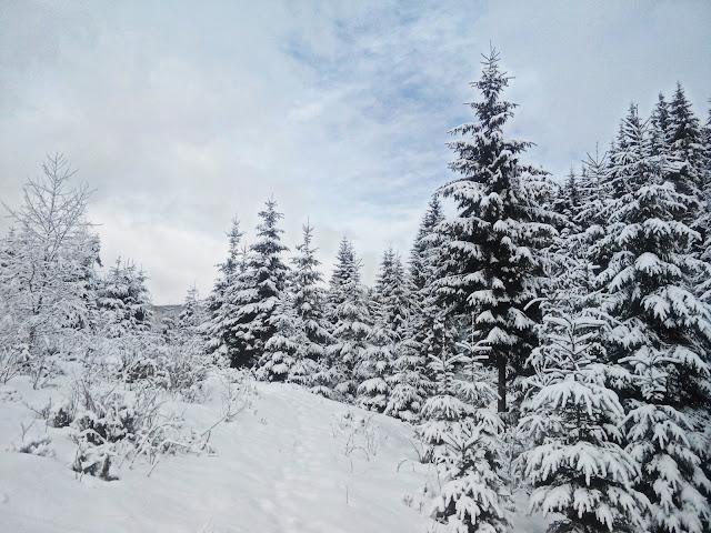 Winter in Bukovel Зимний Буковель