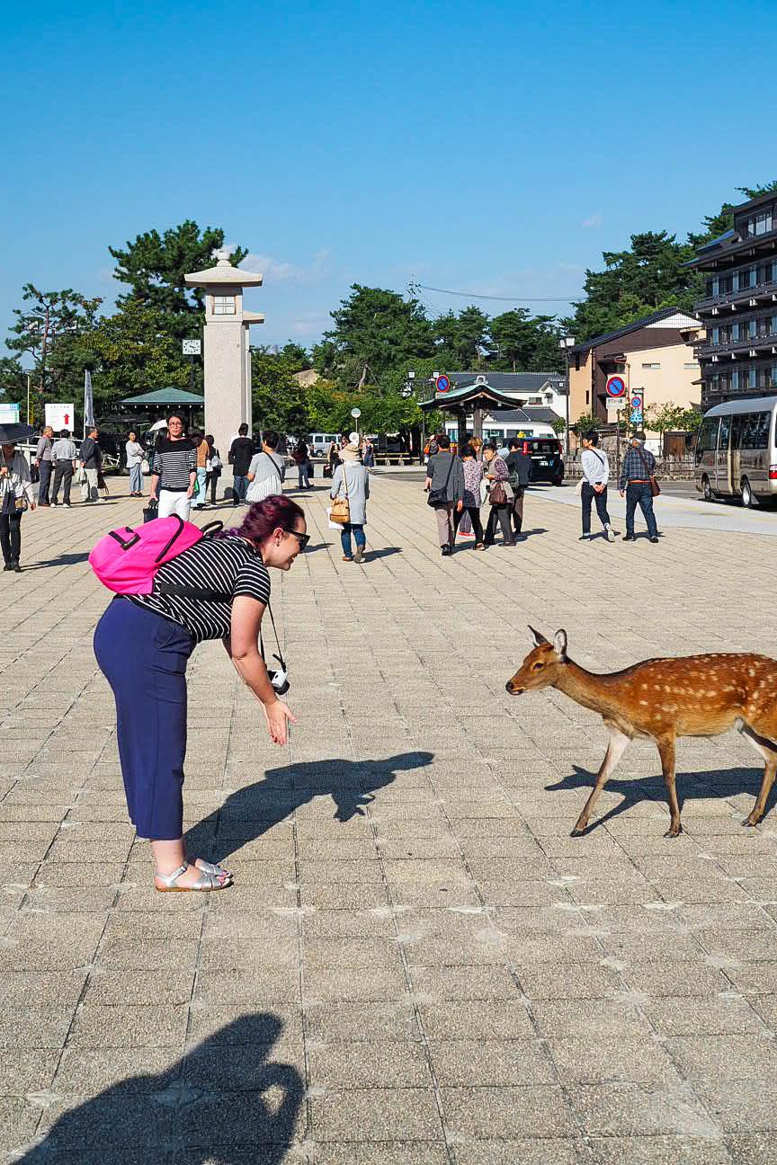 Wild deer on Miyajima