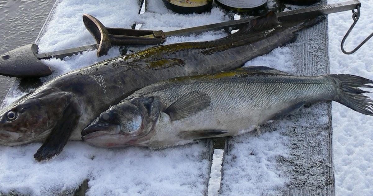 kotitarvekalastajan kalan myynti