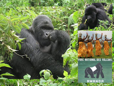 Rwanda Double Gorilla Tour - 3 Days Volcanoes National Park , Kigali and city tour
