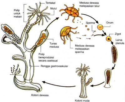 Reproduksi Vegetatif  Pada Tumbuhan dan Hewan