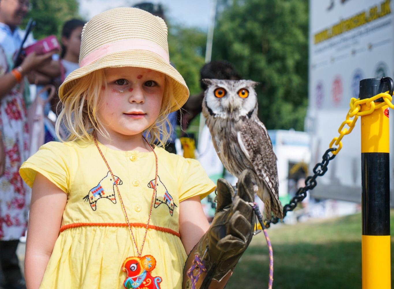 kids festival shropshire
