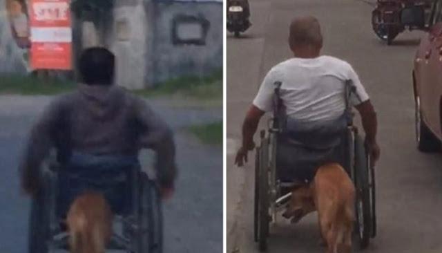 Σκύλος σπρώχνει το αναπηρικό καροτσάκι