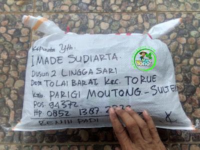 FOTO 4 : Benih Padi TRISAKTI   Pesanan I Made Sudiarta Sesudah di Packing