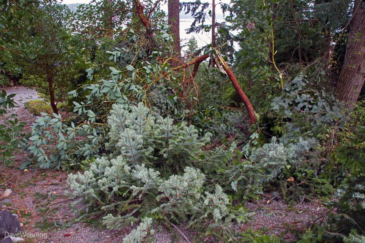 August 2015 Windstorm