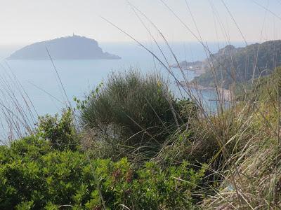 Macchia landscape on Palmaria Island near Portovenere