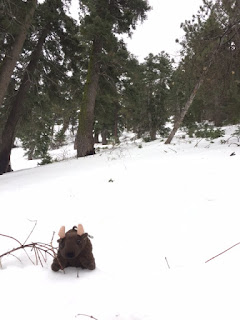 National Park Trust Buddy Bison Program exploring Wrightwood Snow Mountains