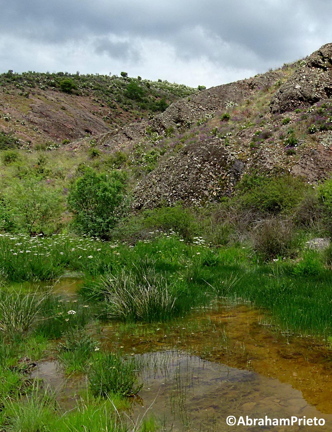 GeoPercepción: Los problemas del sapo partero (Alytes sp.)