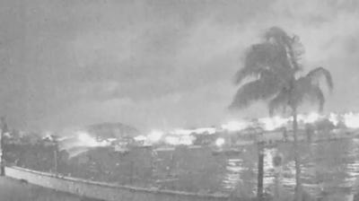 """""""Héctor"""" la palmera que desafió el poder destructor de Irma"""