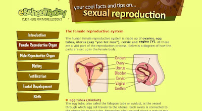 http://www.eschooltoday.com/human-reproduction/the-female-reproductive-organ.html