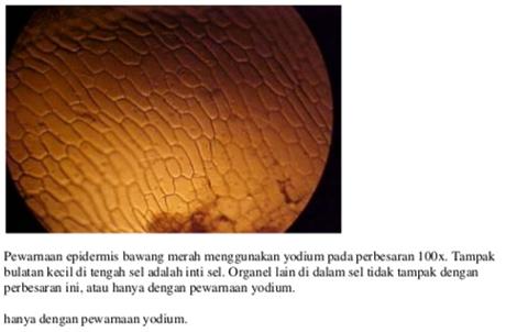 Laporan Praktikum Biologi Mengenal Struktur Sel Hewan dan