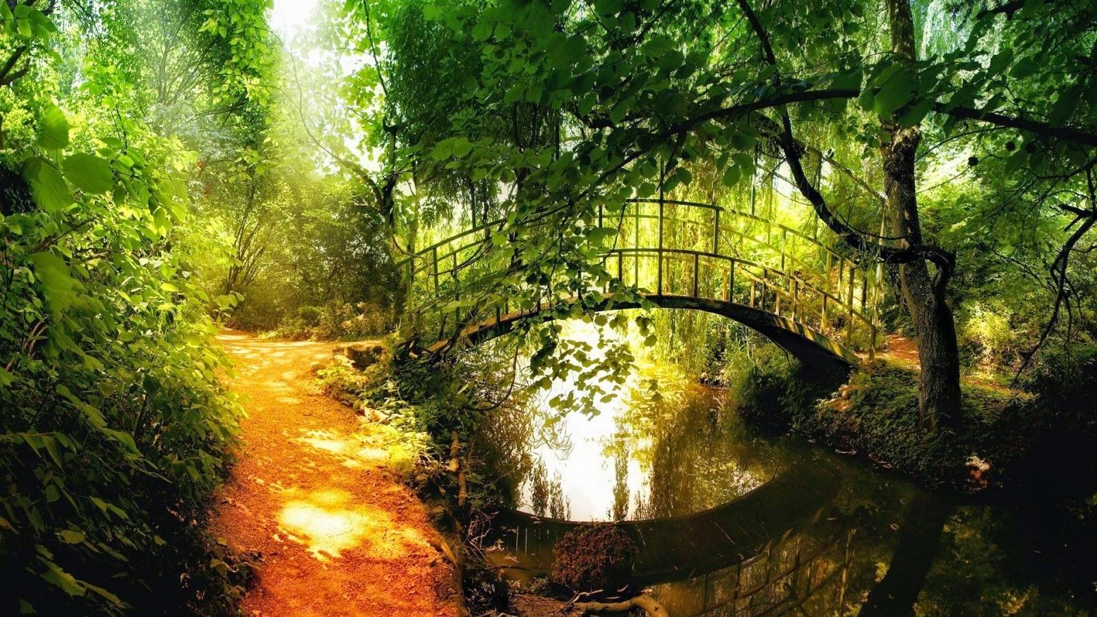 4k Fall Painting Wallpapers Nature Bridge Hd Nature Wallpapers
