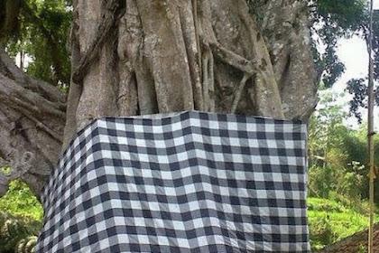 Ini Alasan Kenapa Pohon Besar di Bali diikatkan Kain Poleng