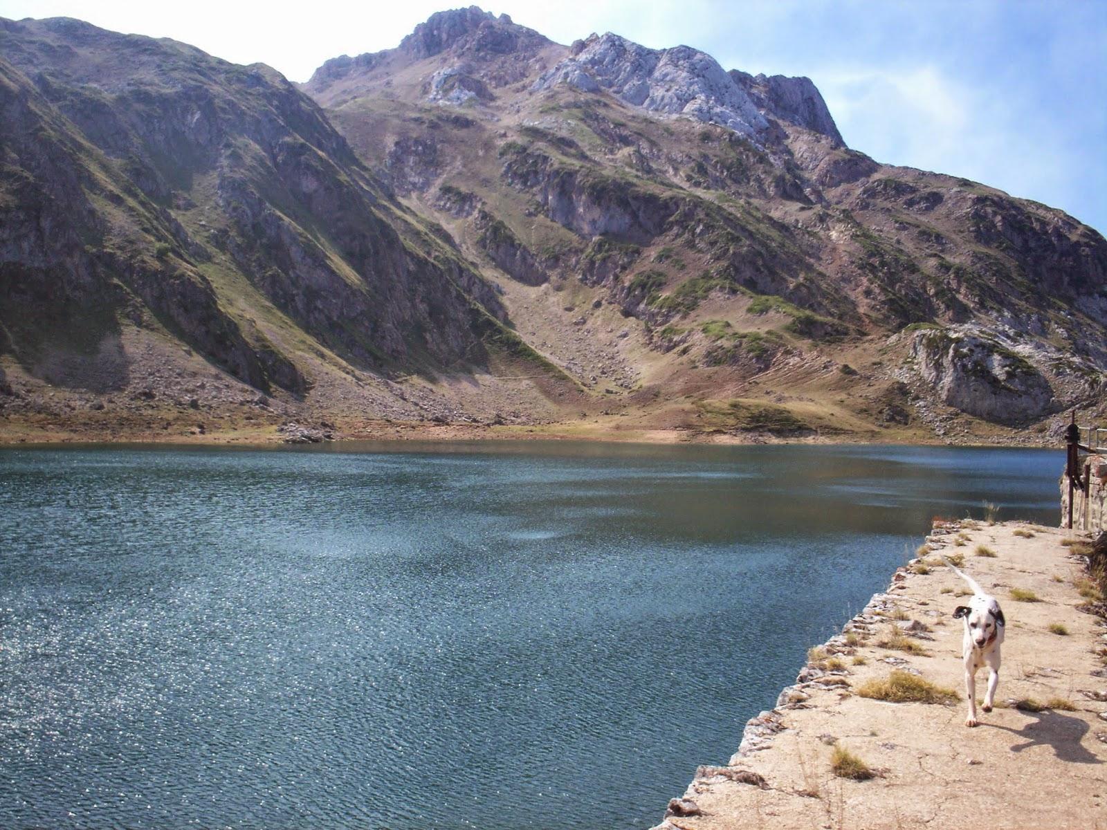 Dardo caminando junto al Lago Calabazosa en Somiedo.