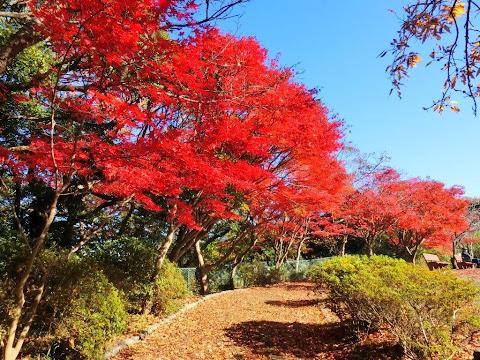 源氏山の紅葉