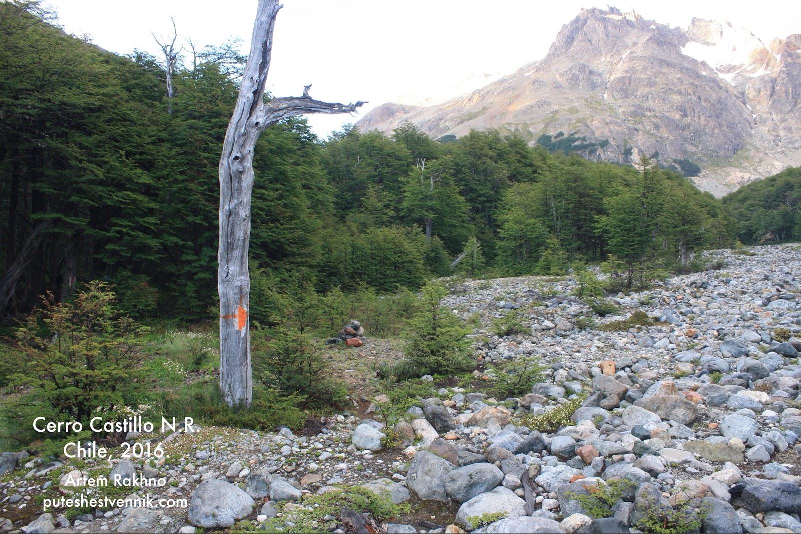 Указатель тропы на высохшем дереве