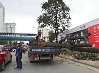 """Chủ tịch Hà Nội yêu cầu cử người đi """"du học"""" quản lý cây xanh"""