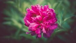 Flower Photos by Alex Blajan