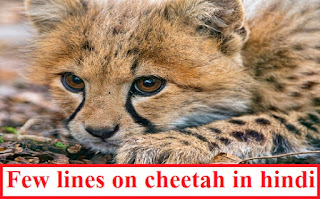 Few lines on cheetah in hindi