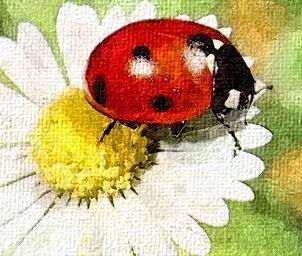 http://amajeto.com/games/ladybugs_room/