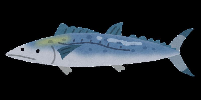 サワラのイラスト(魚): 無料 ...