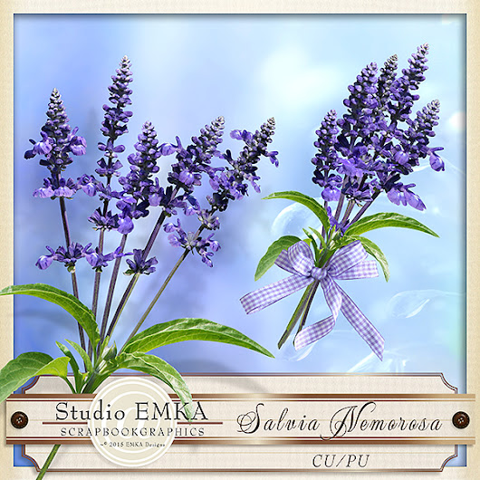 My Garden 60 - Salvia Nemorosa - CU by Studio EMKA