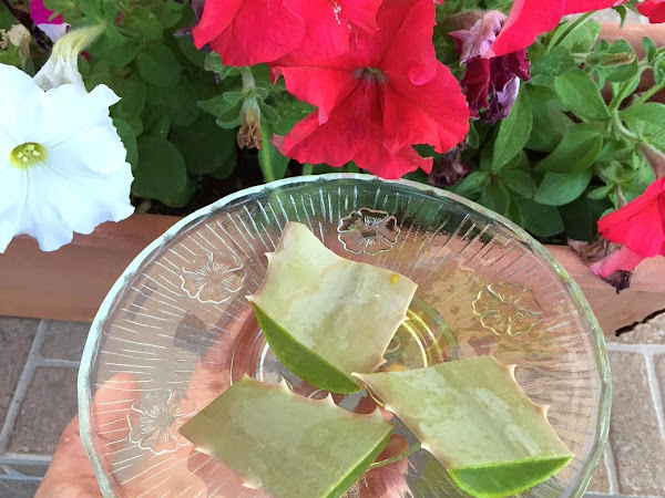 Aloe Vera - how and when to use it