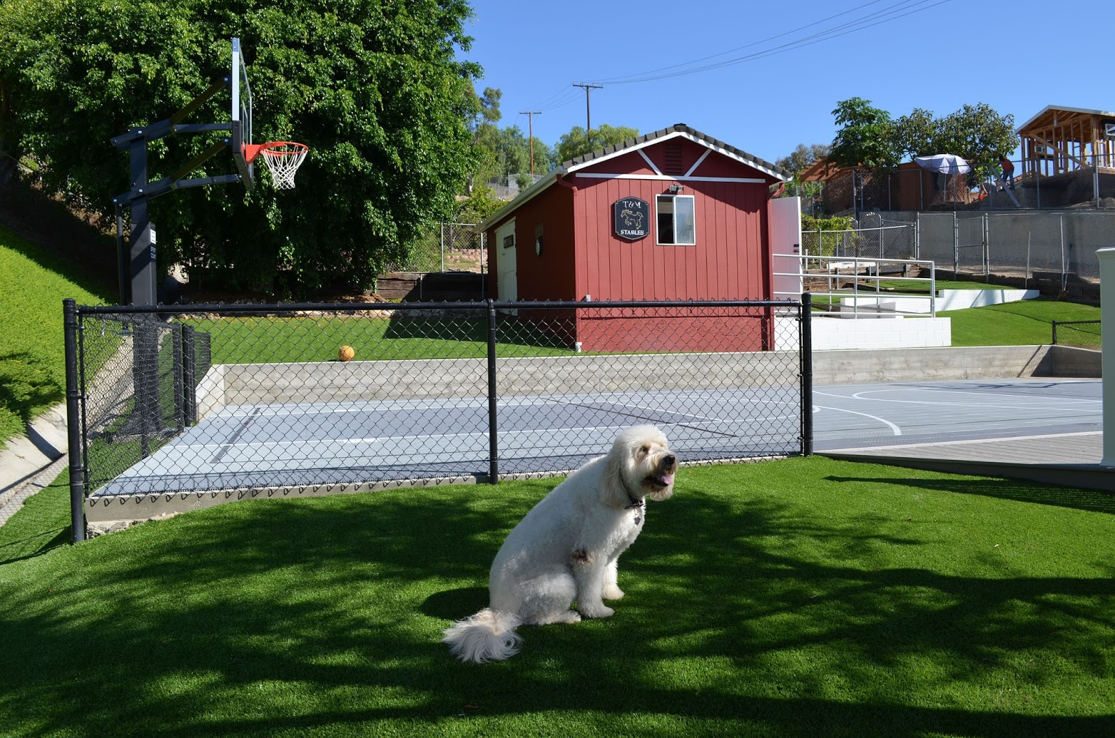 Pets Give Sport Court Two Paws Up!