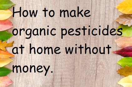 How to make organic pesticides at home without money.