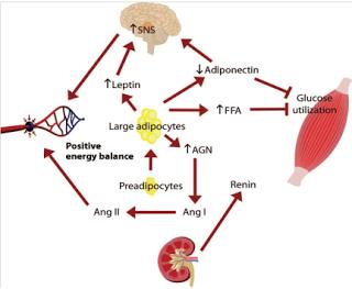 Hipertension y obesidad relacion