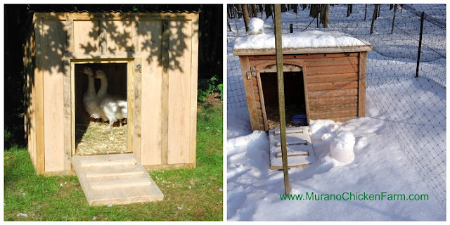 Bad winter chicken coops, small