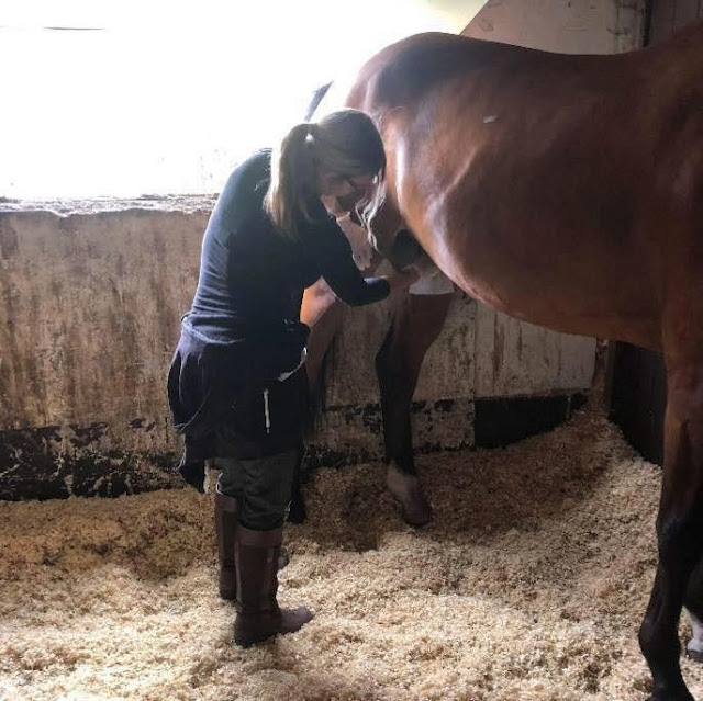 bersihkan kelamin kuda