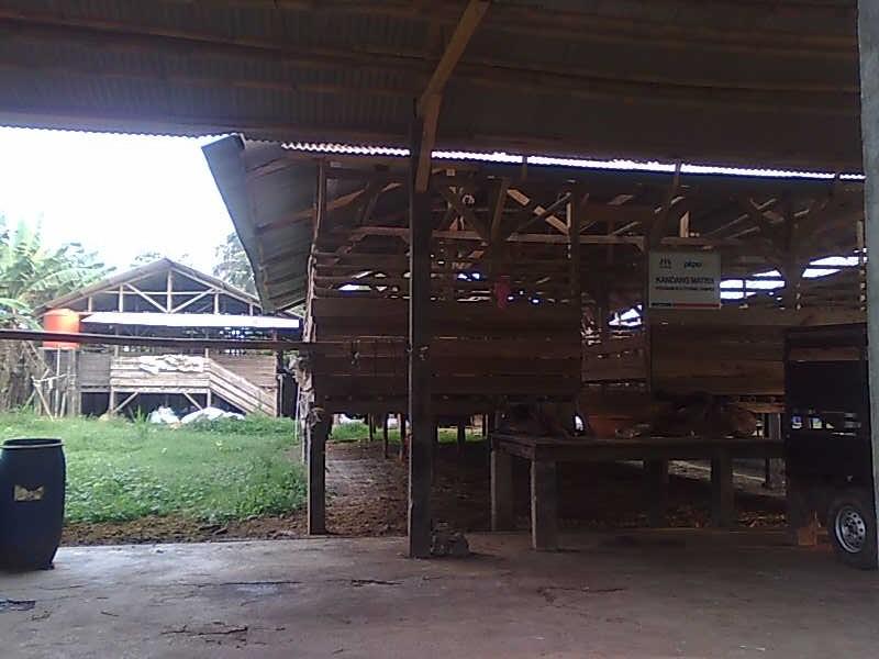 Salah satu Kandang Domba & Kambing DI CV Mitra Tani Farm Ciampea, Bogor, Jawa Barat