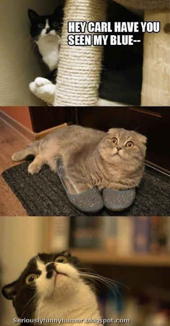 Hilarious cats photo