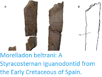 http://sciencythoughts.blogspot.co.uk/2015/12/morelladon-beltrani-styracosternan.html